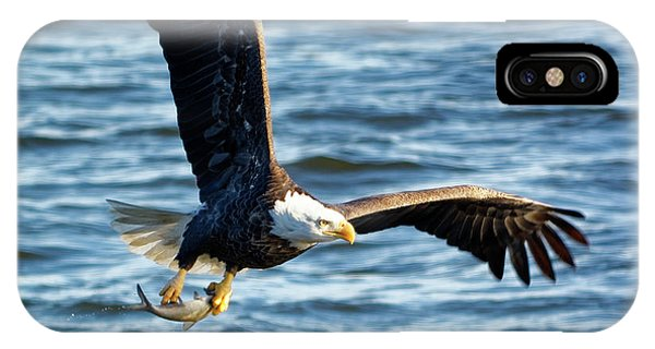 Bald Eagle With Fish IPhone Case
