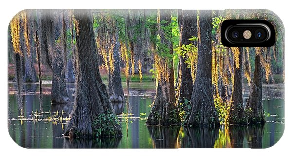 Baldcypress Trees, Louisiana IPhone Case