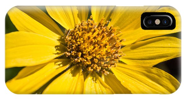 Balsamroot 2 IPhone Case