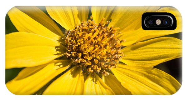 Balsamroot 2 IPhone Case