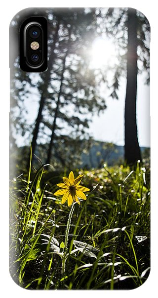 Balsamroot IPhone Case