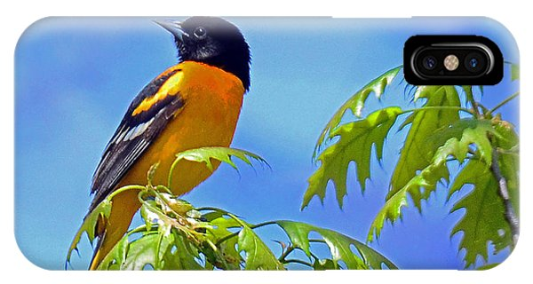 Baltimore Oriole In An Oak Tree IPhone Case