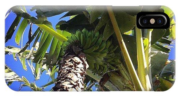 #banana #maui #hawaii #ono #fresh IPhone Case