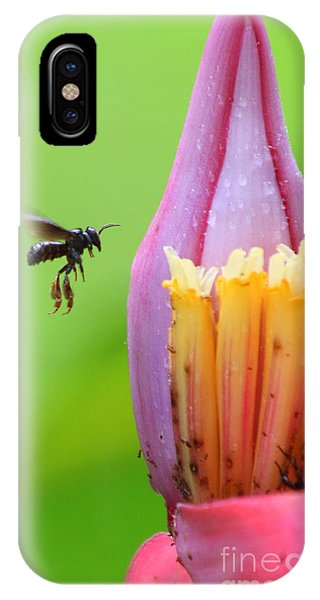 Banana Pollinator   IPhone Case