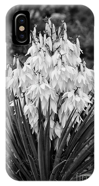 Banana Yucca In Bloom IPhone Case