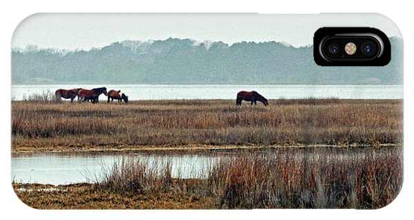 Band Of Wild Horses Along Sinepuxent Bay IPhone Case