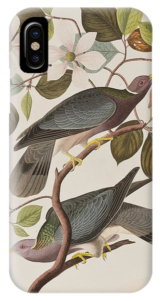 Pigeon iPhone Case - Band-tailed Pigeon  by John James Audubon