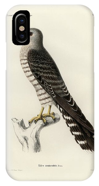 IPhone Case featuring the drawing Banded Kestrel by J D L Franz Wagner