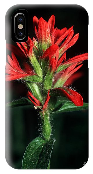 Banff - Indian Paintbrush 4 IPhone Case