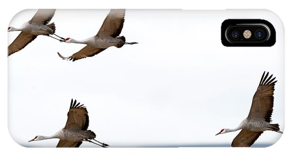 Sandhill Crane iPhone Case - Bank Right by Mike Dawson