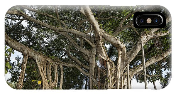 Banyan Tree At Bonnet House IPhone Case