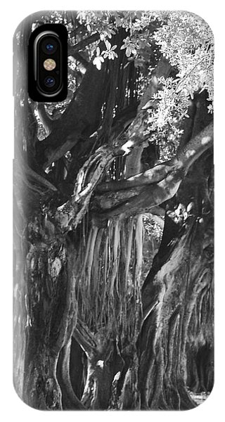 Banyan Tree At The Museum IPhone Case