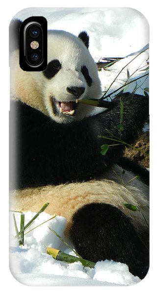 Bao Bao Sittin' In The Snow Taking A Bite Out Of Bamboo2 IPhone Case