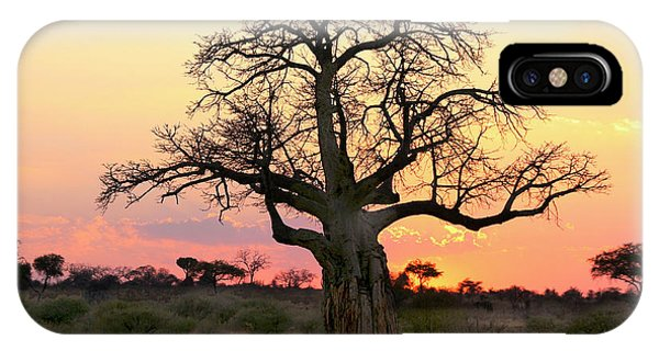 Baobab Tree At Sunset  IPhone Case