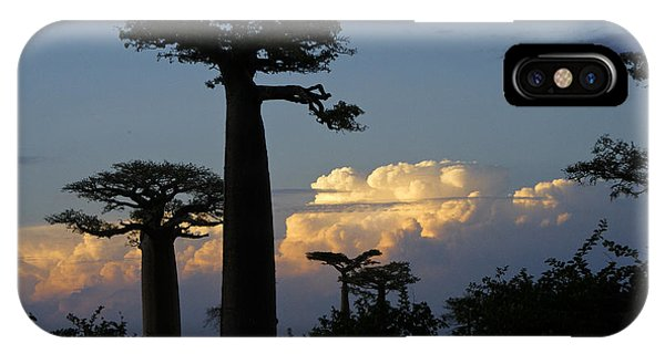 Baobabs And Storm Clouds IPhone Case