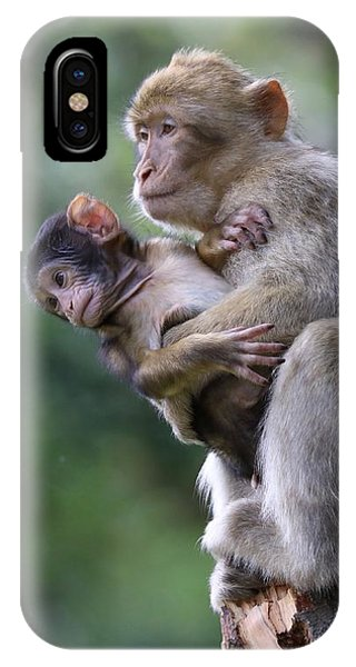 Barbary Macaque Mother And Baby IPhone Case