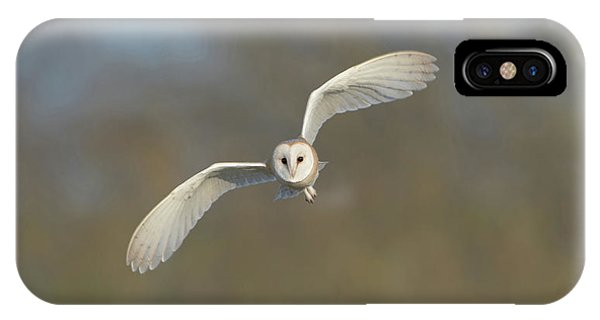 Barn Owl Hunting In Worcestershire IPhone Case