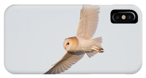 Barn Owl Hunting IPhone Case