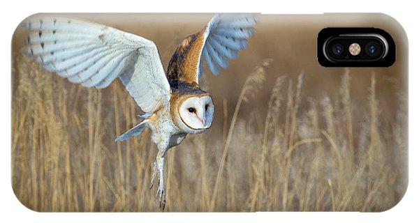 Barn Owl In Grass IPhone Case