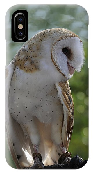 Barn Owl Phone Case by Keith Lovejoy