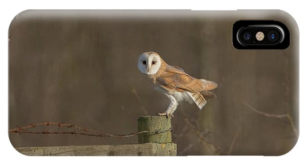 Barn Owl On Fence IPhone Case