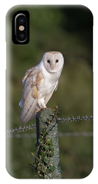 Barn Owl On Ivy Post IPhone Case