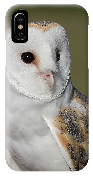 Barn Owl Portrait - Winged Ambassadors IPhone Case