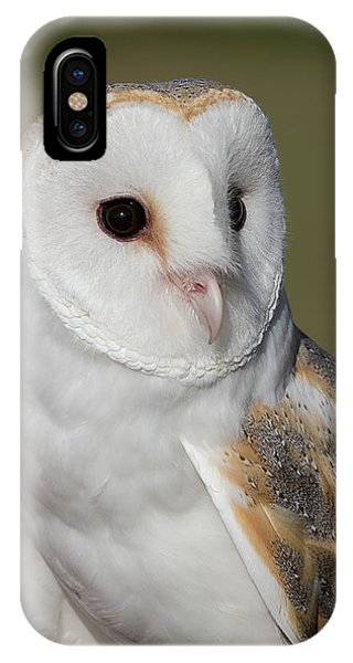 Barn Owl Portrait - Winged Ambassadors IPhone Case