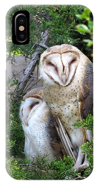 Barn Owls Phone Case by George Jones