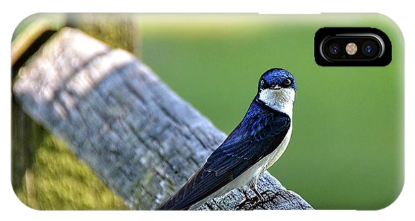 Barn Swallow Looking Angry IPhone Case