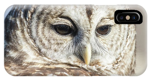 Barred Owl 1 IPhone Case