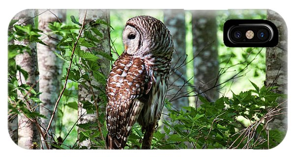 Barred Owl In The Alder Tree Forest IPhone Case