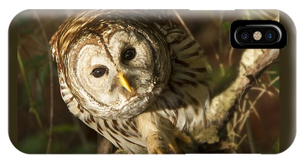 Barred Owl Peering IPhone Case