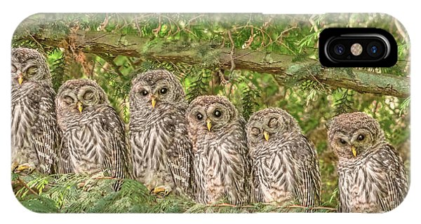 Barred Owlets Nursery IPhone Case