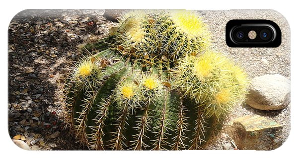 Barrel Of Cactus Needles IPhone Case