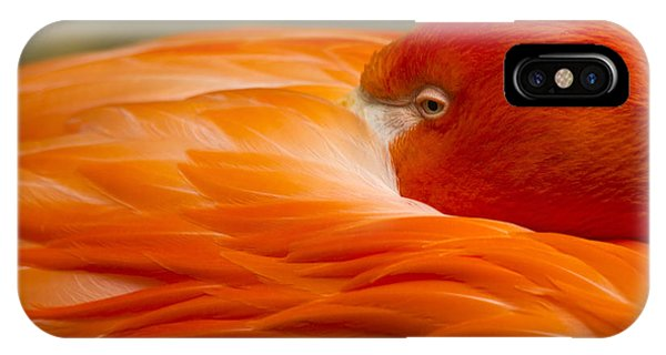 Bashful Flamingo IPhone Case