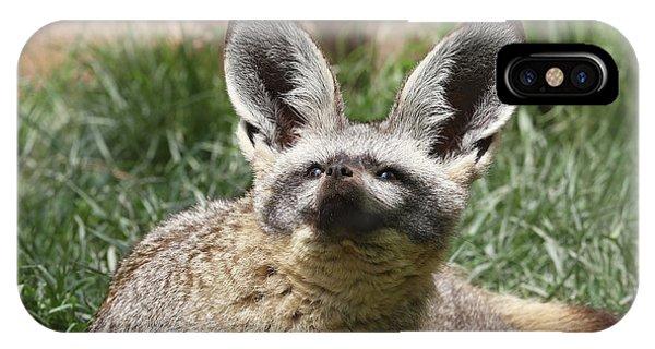 Bat-eared Fox IPhone Case