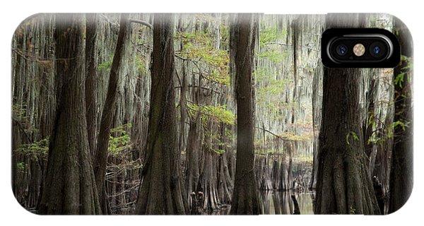 Bayou Trees IPhone Case