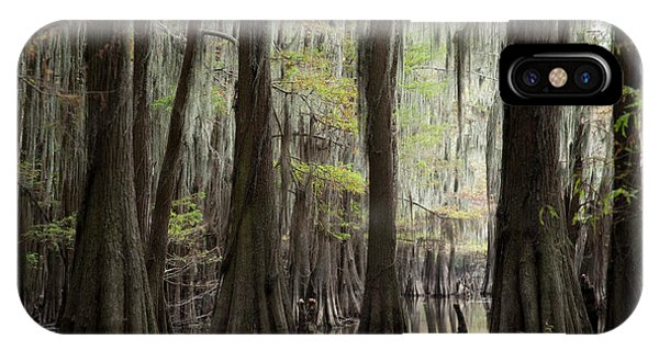 Bayou Trees IPhone Case