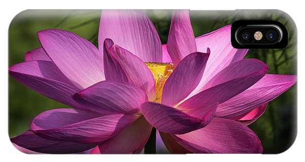 IPhone Case featuring the photograph Be Like The Lotus by Cindy Lark Hartman