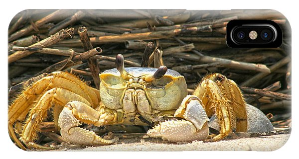 Beach Crab IPhone Case