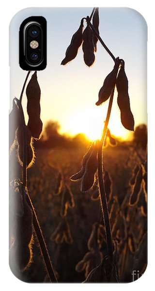 Beans At Sunset IPhone Case