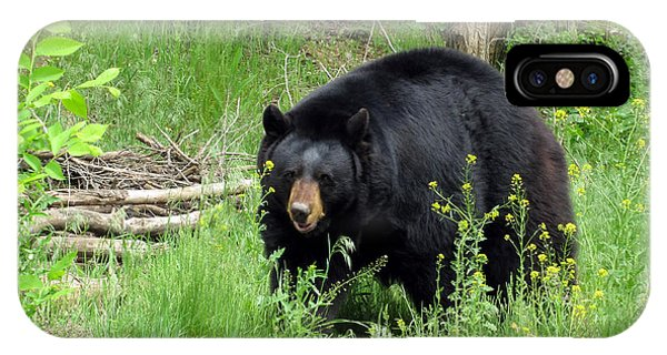Bear 2 Phone Case by George Jones