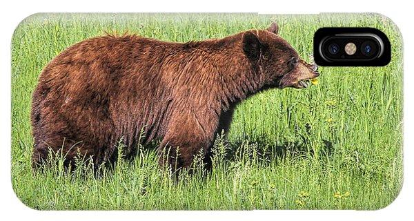 Bear Eating Daisies IPhone Case