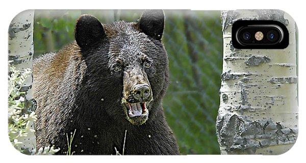 Bear In Yard IPhone Case