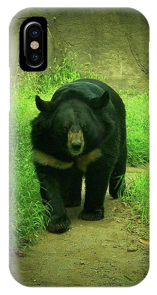 Bear On The Prowl IPhone Case