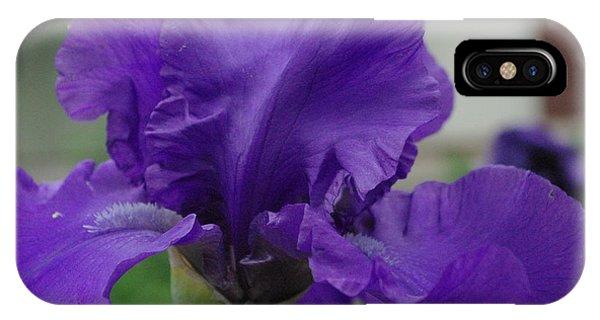 Bearded Blue Iris IPhone Case