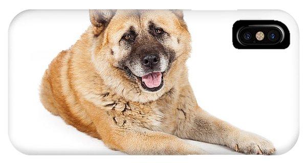 Beautiful Akita Dog Laying IPhone Case