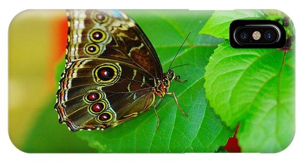 Little Things iPhone Case - Beautiful Butterfly by Jeff Swan