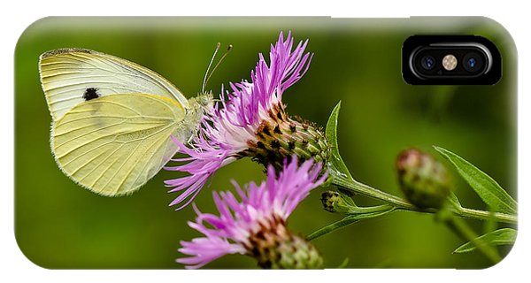 Beautiful Butterfly On Pink Thistle IPhone Case